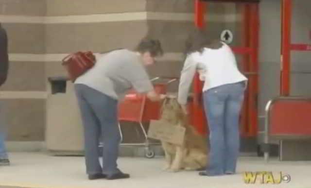Люди не понимают, почему собака сидит около магазина и не уходит. Но, прочитав записку на шее собаки, все становится явным