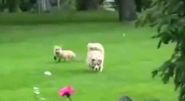 Хозяин был в шоке, когда узнал к кому каждый день убегает в лес его собака!