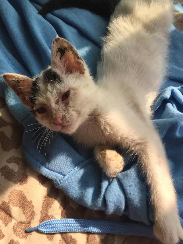 «Он мяукнул и упал на землю…» Рыночный котёнок больше никогда не попадёт на базар, где родился!