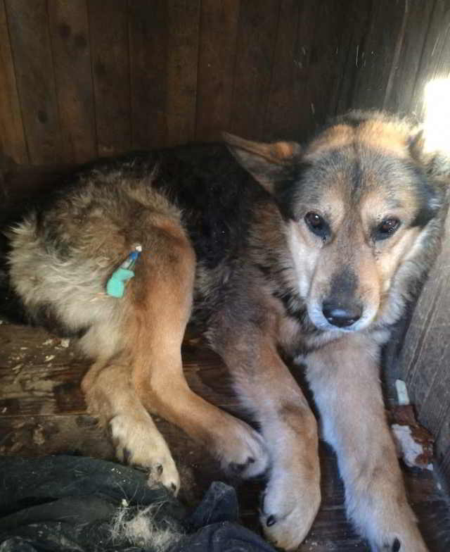 Женщина замерла, рассматривая фотографию пса… Через минуту волонтёры узнали, что произошло Чудо!