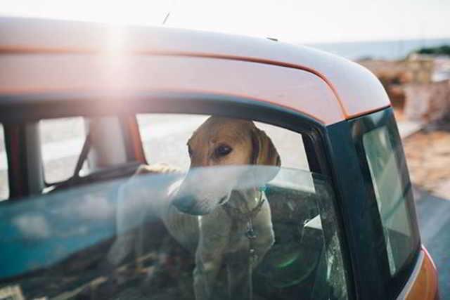 Этот пес медленно умирал на цепи, пока его не спасли!