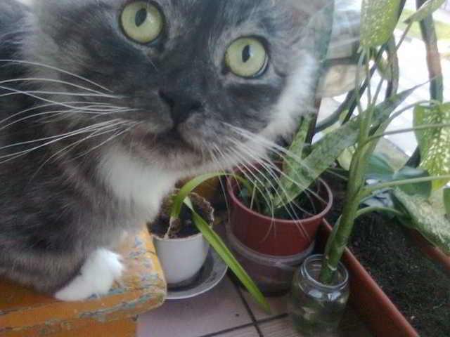 «Заберите, он пахнет тухлятиной!» Фантастическое превращение кота-отказника в роскошное животное)
