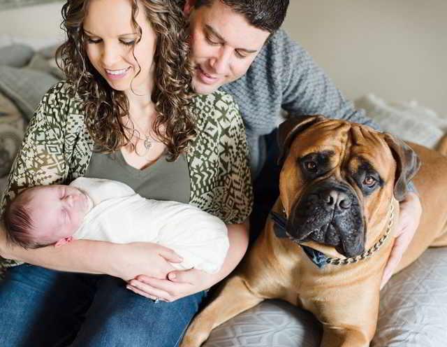 Бульмастиф первым узнал, что хозяйка беременна! Когда малыш родился, пёс отдал ему самое ценное…