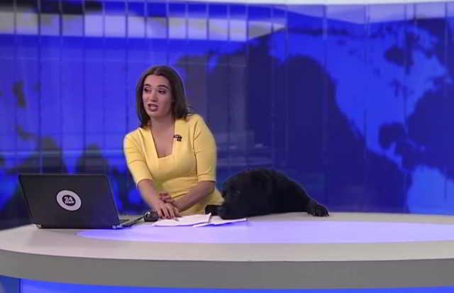 Он вылез из-под стола прямо во время выпуска новостей! Реакция телеведущей заставит вас посмеяться