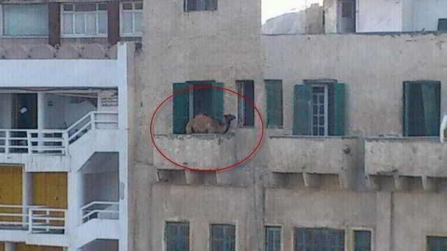 Приколы на балконах (11 фото)