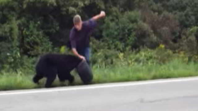 Пара увидела медведя, который странно себя вел. Когда они поняли причину, то сразу же начали действовать. Видео...