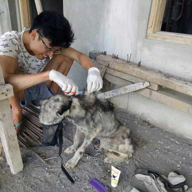 Этот щенок Хаски был найден настолько истощенным, что она выглядела как скелет.Собачонке недолго осталось жить, но ее успели спасти. Посмотрите, какая она теперь красавица!