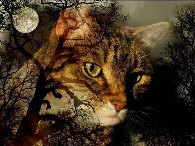 Кошка пришла с того света..