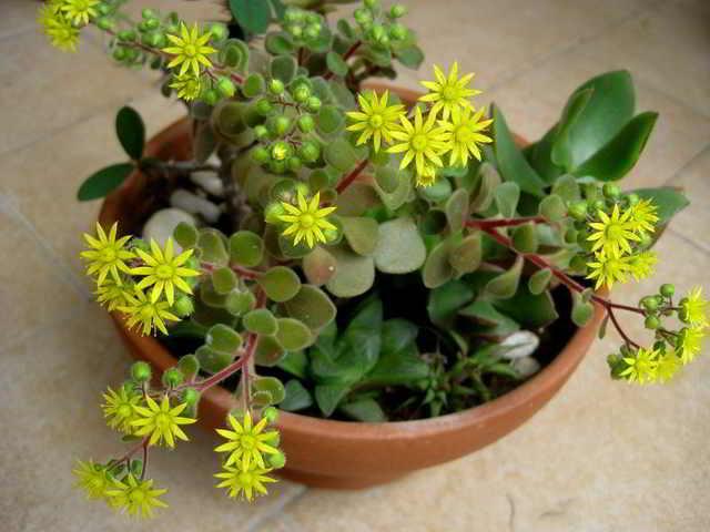 Запомните их! Эти 10 комнатных растений принесут вашей семье счастье и любовь