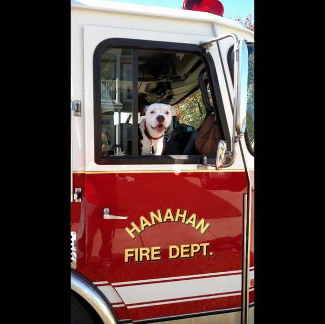 """Пожарный вынес щенка из огня – но хозяева отказались от """"порченого"""" малыша…"""