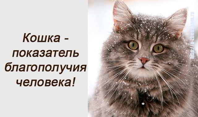 А вы знали, что кошка является показателем благополучия человека?