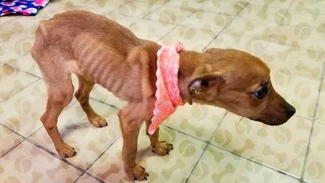 Голодный щенок выполз навстречу полиции, из последних сил виляя хвостиком