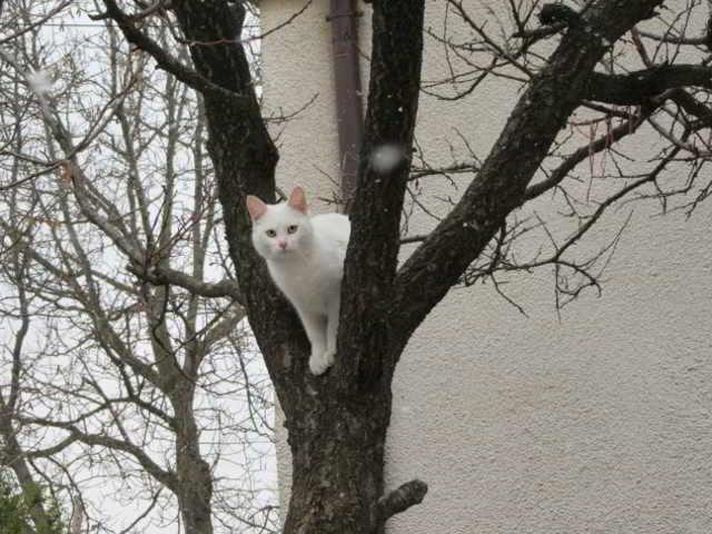 Бездомный кот по кличке Санта страдал от голода и хотел попросить у людей еду, но в ответ получил пулю