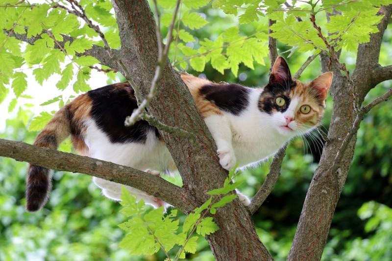 Мистические случаи с кошками