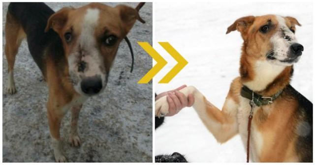 Собака бродила по улицам, в одиночку справляясь с болью… Пока замечательные люди не решились заглянуть ей в глаза!)