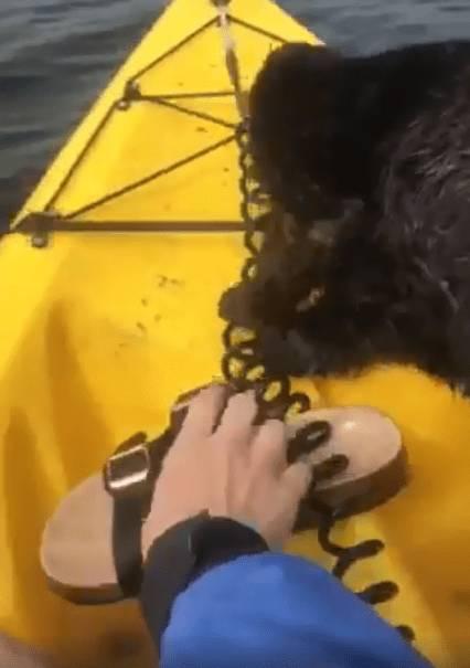 Выдра залезла на каяк и попыталась украсть обувь, но это было так мило, что никто не смог ей противостоять