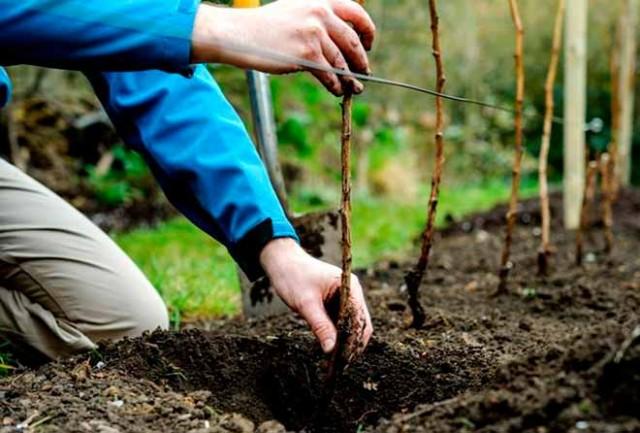 Все об осенней посадке плодовых деревьев и кустарников