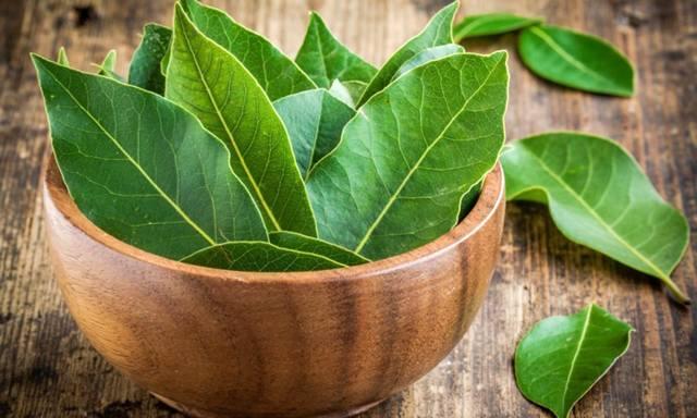 Этот лист — мощное средство от высокого давления, сахара в крови, кашля, отёков и лишнего веса!