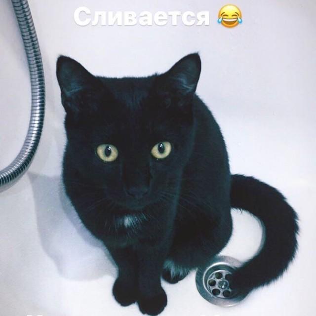 Юля подкармливала уличную кошку, а потом та пропала. Вечером, придя домой, девушка замерла на пороге!