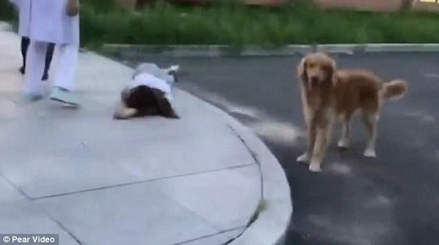 «Хозяйка, я с тобой!» Верный пёс охранял владелицу, когда она упала в обморок…