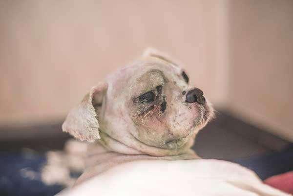 Хозяин выбросил собаченку на улицу… А вскоре с питомцем случилась беда!