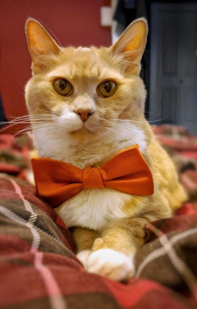 Кот-толстяк, которого бросили хозяева, нашел новый дом и преобразился, похудев с 10кг до 4,4кг!