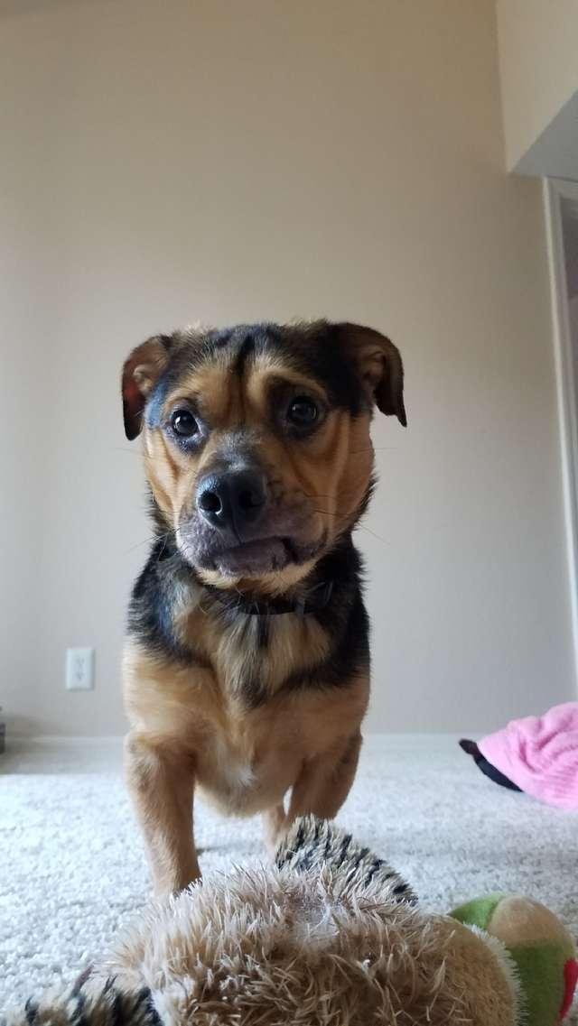 Пара забрала из приюта очень грустного пса, несмотря на предостережения. И вы бы видели его улыбку!