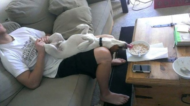 Смешные фотографии о том, как собаки умеют выпрашивать еду - 27 Фото!