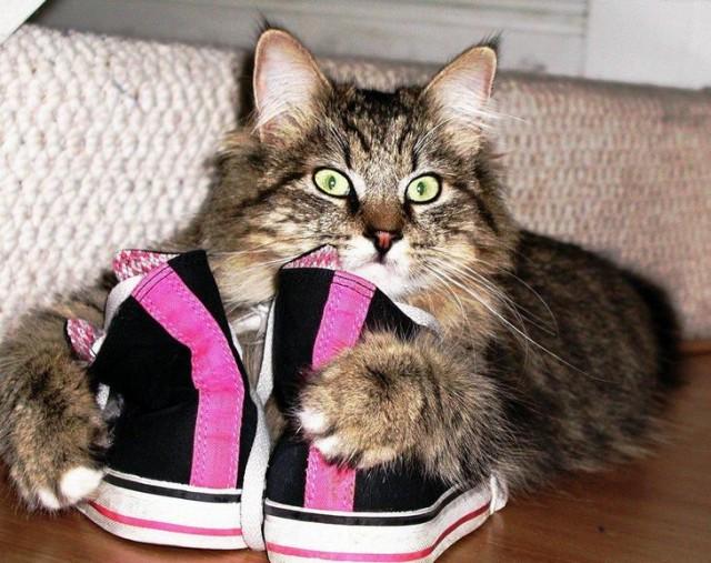 Как избавиться от кошачьего запаха мочи в квартире в домашних условиях
