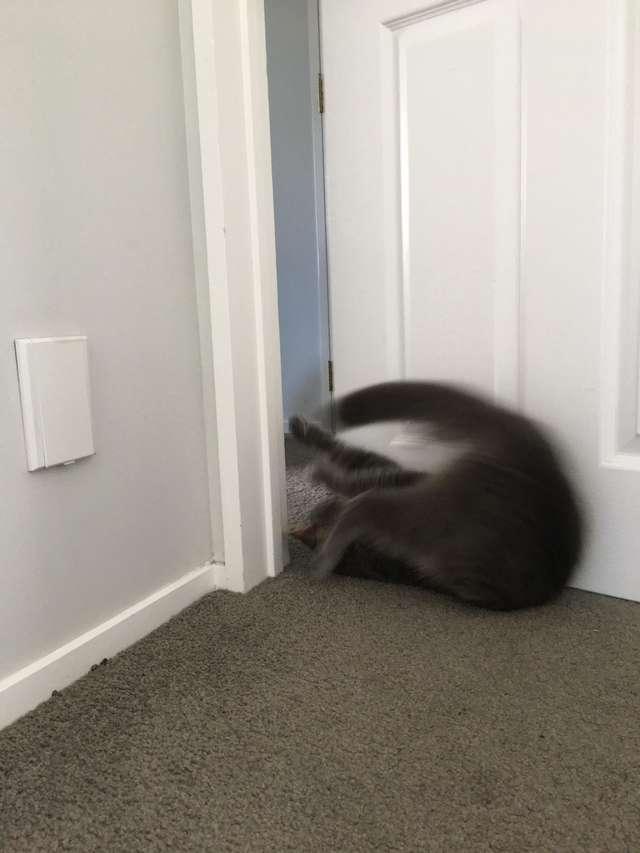 Видео: Кот умеет открыть любую дверь в доме! И за ним очень весело наблюдать… :)