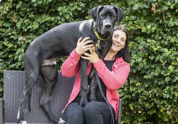 Он до сих пор растет! Люди взяли из приюта щенка, но он уже в 5 месяцев размером с лошадку! :)