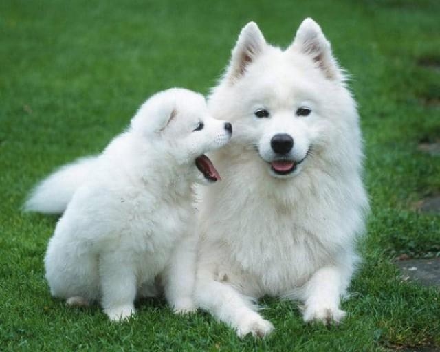 Как назвать щенка мальчика?
