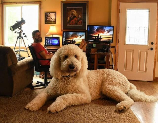 Этот мужчина делает фотографии со своей собакой. Вроде, ничего особенного, но что-то здесь явно не так