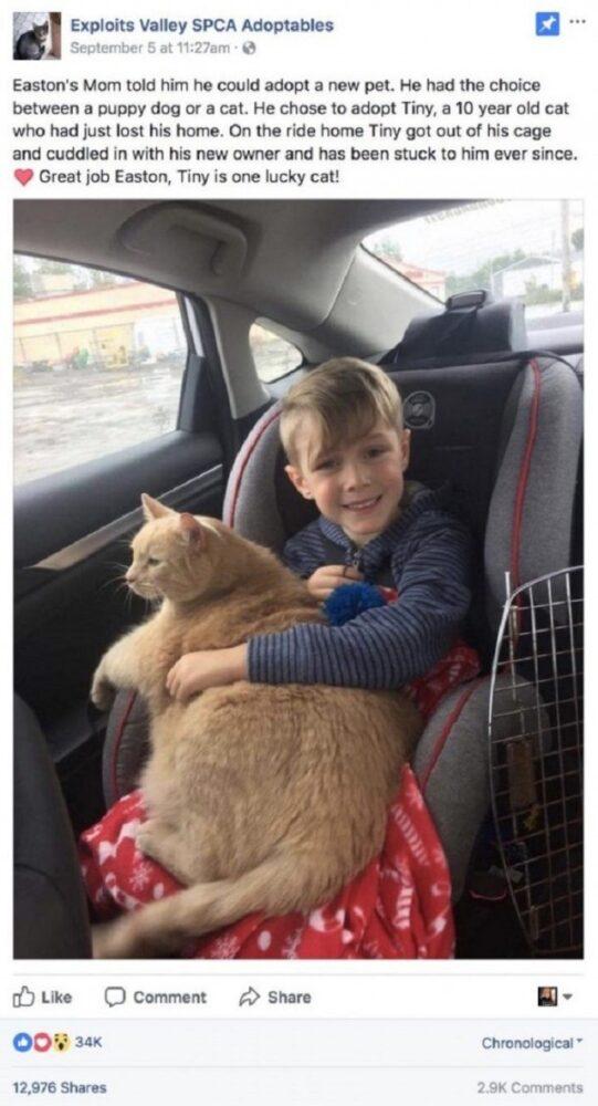 Мама разрешила сыну выбрать любое животное из приюта. Малыш выбрал старого и толстого кота.