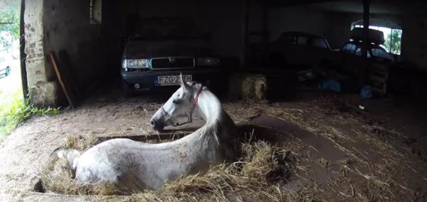 Видео: Спасение лошади из гаражной ямы....
