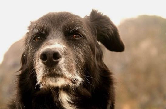 Очень красивая история про старого пса.