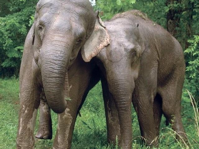 Ничто человеческое животным не чуждо . Это трогательно до слез! 20 Фото