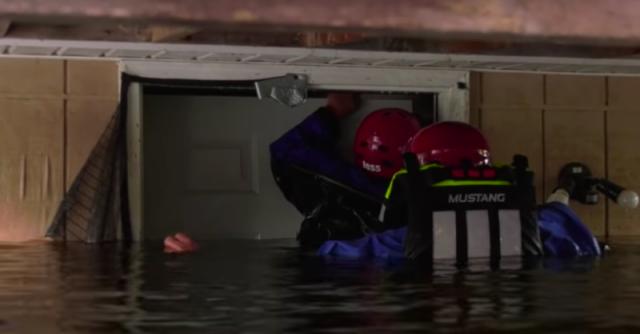 Видео: В затопленном после урагана доме несчастная собака неделю дрейфовала на диване
