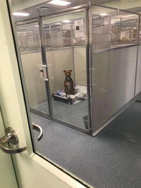 Брошенный пес дрожал от страха! Одеялко помогло решить половину его проблем…