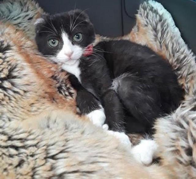 Безухий котенок попал в приют! Он не мог верить людям, но однажды ему подарили шапочку.