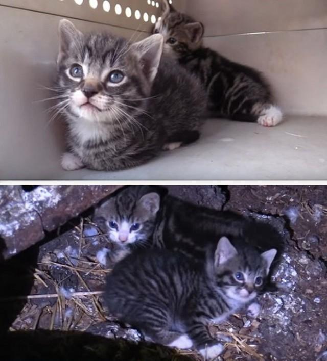 «В борьбе за жизнь не всем удалось победить!»: в старом здании замерзали животные, но помощь все-таки подоспела...