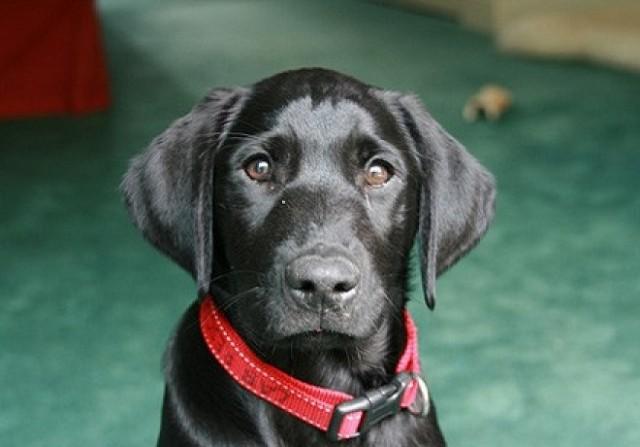 Судьбоносное письмо: мужчина намеревался вернуть пса в приют, но несколько строчек помогли ему изменить решение!