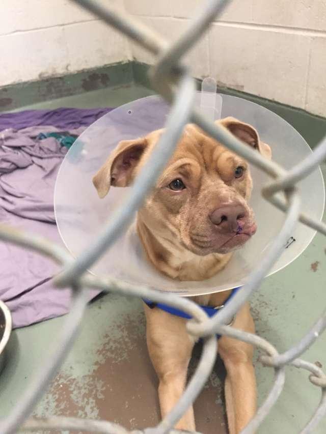 Хозяева особенного пса стали бездомными, а его отдали в приют… Но счастье было совсем близко!