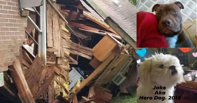 Невероятные питомцы: собачки почуяли опасность и спасли хозяев от неминуемой гибели в доме