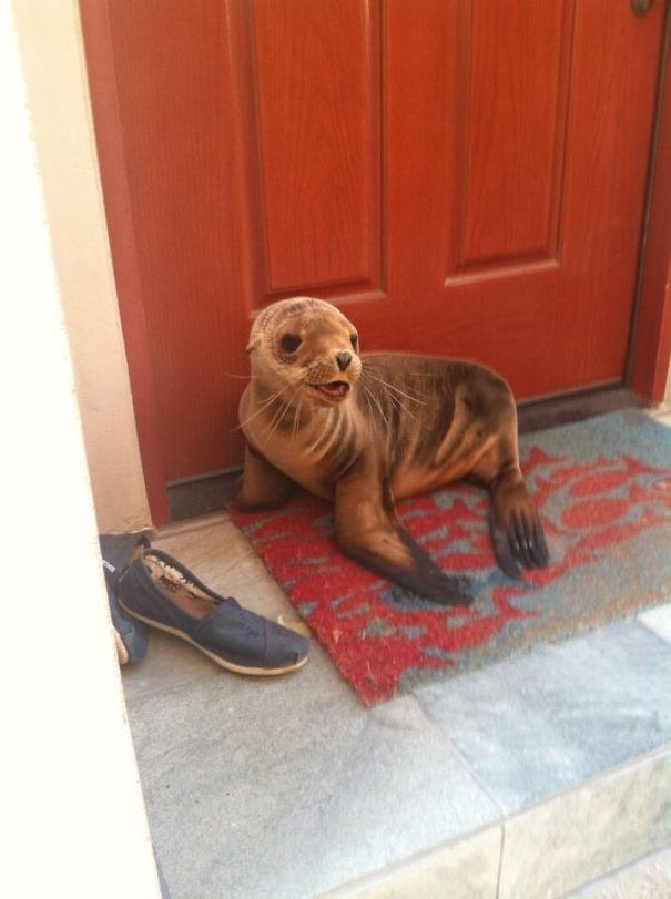 10+ животных, которые просто пришли поздороваться и растопили наши сердца