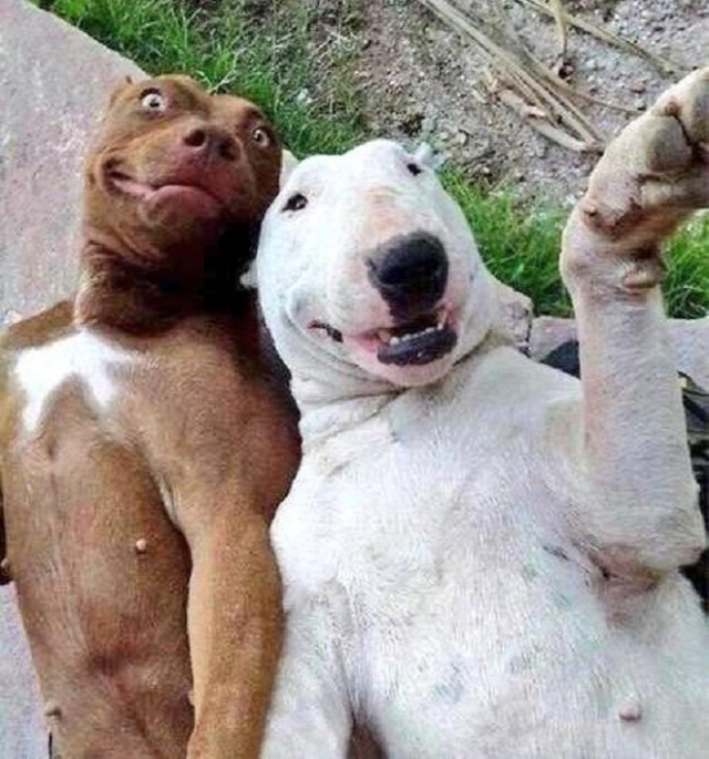 Веселое селфи: 10 фотографий, на которых животные выглядят смешно и неожиданно