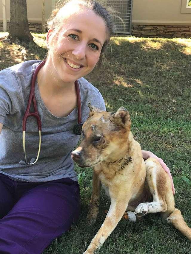 Собака чудом спаслась при пожаре! Но хозяева не захотели забирать ее обратно, оставив у врача…