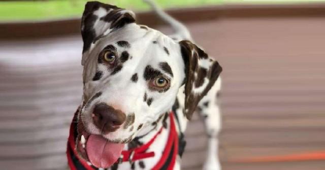 Тяжелая болезнь и одиночество изменили характер собаки, отталкивая от нее людей. А ей просто нужно было понимание …