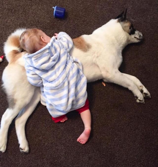 Интуиция собаки спасла жизнь беременной девушке и её будущего ребенка