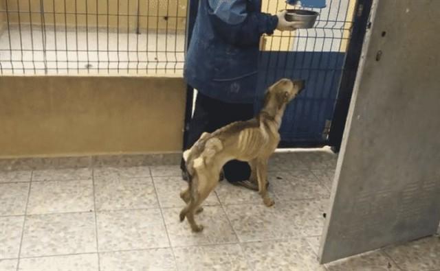 Выходя из помещения он просто погладил пса… через секунду мужчина бросился за помощью…